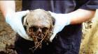 """Expoziţia """"Numitorul comun – Moartea"""", deschisă, joi, la Turda"""
