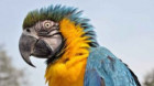 Papagalii au capacitatea de a lua decizii economice complexe şi de a face profit cu un minimum de efort