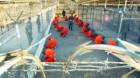 Jihadişti în centrul de detenţie Guantanamo