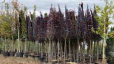 Pădurea Clujenilor – a început plantarea primilor 150 de arbori din 1500
