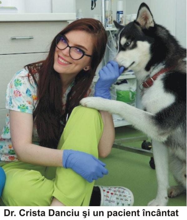 datând medicul veterinar)