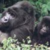 Animalele de la grădina zoologică din Washington au simţit apropierea cutremurului