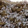 A început pelerinajul musulmanilor la Mecca