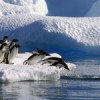 În Antarctica n-a fost niciodată atît de cald