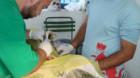 Dej: Campanie de sterilizare gratuită a cîinilor şi pisicilor