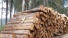 Arbori în valoare de 180.000 de lei tăiaţi ilegal