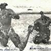 Acţiune IICCMER de căutare şi deshumare a fraţilor Toader şi Avisalon Şuşman