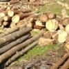 Circa 98 mc de material lemnos confiscat de poliţiştii clujeni în luna august