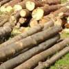 Material lemnos confiscat de poliţişti