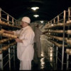 Se redeschide Fabrica de brînzeturi de la Țaga