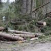 Combaterea jafului din păduri, prioritate în 2017 pentru procurorii Parchetului Curţii de Apel Cluj