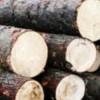 Material lemnos în valoare de circa 5.700 de lei, confiscat de poliţişti