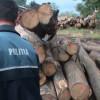 Mafia lemnului continuă să radă pădurile Clujului