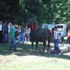 Concurs de cai la Mărişel
