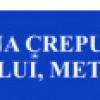 Andreea Jura – Dan Haja          ÎN LUMINA CREPUSCULARĂ A VISULUI, METAFORE…