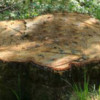 Dezastrul din pădurile de la Măguri-Răcătău este cutremurător