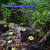Cultură indoor de cannabis, descoperită în incinta unei firme din Cluj-Napoca