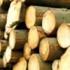 Material lemnos în valoare de 2.700 lei, confiscat de poliţiştii clujeni