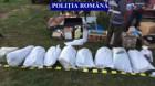 Cultură de cannabis, descoperită de poliţişti într-o localitate din judeţul Cluj