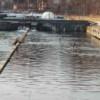 La Gilău, cormoranii golesc bazinele de păstrăvi