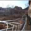 Copacii din prima Grădină Botanică a Clujului, defrişaţi de dezvoltatori imobiliari