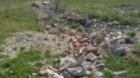 Rampele clandestine de la Turda dau bătăi de cap poliţiştilor locali