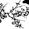 """Concursul Internaţional de Compoziţie """"Sigismund Toduţă"""", ediţia a II-a : RECITAL CAMERAL la Fundaţia """"Sigismund Toduţă"""""""
