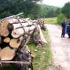 Au scăzut tăierile ilegale de păduri