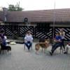 Eveniment interactiv de prezentare a beneficiilor terapiei asistate de câini pentru copiii cu autism