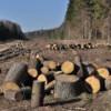 Hoţii de lemne fac în continuare ravagii în pădurile Clujului
