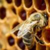 Peste 97 milioane lei pentru apicultori