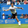 Tenis / Djokovic şi Pliskova, campionii de la Eastbourne