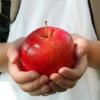 CJ  a iniţiat demersurile de licitare a contractelor pentru furnizarea de mere în şcoli