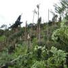Furtuna a făcut ravagii în nord-estul judeţului Cluj
