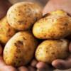 Cartofii – în topul ieftinirilor din august