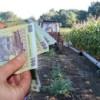 Depunerea documentelor pentru sprijinul cuplat în sectorul vegetal