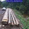 Hoţii de lemne continuă să-şi facă de cap la Beliş