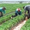 Peste un sfert dintre români lucrează în agricultură