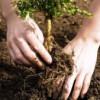 """Cererile pentru """"Prima împădurire"""" se pot depune până în 17 noiembrie"""