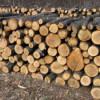 """Forestierii acuză """"haosul"""" de pe piața lemnelor de foc din România"""
