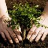 Romsilva afirmă că a plantat peste 33 de milioane de puieţi forestieri