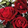 Importăm masiv chiar şi trandafiri