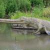 Un crocodil de 600 de kilograme, capturat în nordul Australiei