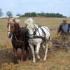 România are cei mai mulţi cetăţeni din UE ocupaţi în agricultură
