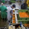 Finanţare de 203 milioane euro pentru procesarea produselor agricole