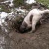 45 de câini dresaţi să caute trufe, într-o competiţie în ring