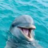 Un delfin în perioada de rut încinge spiritele într-o localitate din Franţa