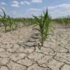 Noi măsuri de sprijin pentru fermierii afectaţi de secetă