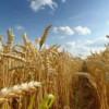 Nu este nevoie de o taxă pentru exporturile de grâu