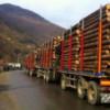 A scăzut exportul de lemn